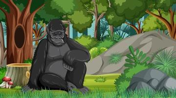 Gorilla in forest or rainforest scene with many trees vector