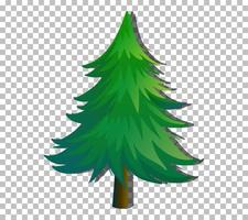 An evergreen tree isolated vector