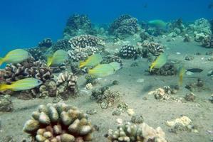 Fish swimming near coral photo