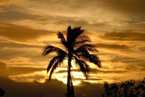 Palm tree silhouette at dusk photo