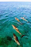 Overhead shot of small dolphin pod photo