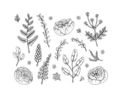 Set of floral design elements isolated on white background. Vector illustration in sketch style