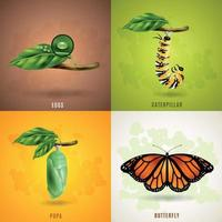 Butterfly 2x2 Design Concept Vector Illustration