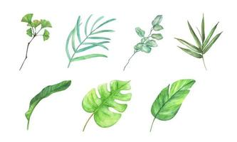 Green leaves elements collection - for bouquets, wreaths, arrangements, wedding invitations, anniversary, birthday, postcards, greetings, cards, logo. Watercolor floral illustration set. vector