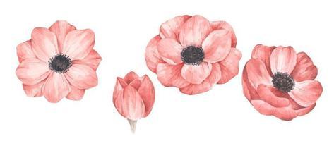 conjunto de flores de acuarela vector