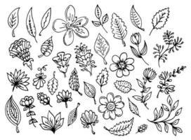 Vector set of outline leaves and flowers. Black contour line art autumn leaves and decorative flowers. Plant ornate decorations overlay