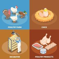 Poultry 2x2 Design Concept Vector Illustration
