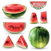 Watermelon Realistic Set Vector Illustration