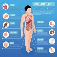 Ilustración de vector de cartel isométrico de anatomía masculina