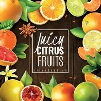 Citrus Fruit Background Vector Illustration