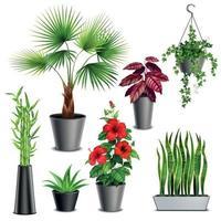 House Plants Realistic Set Vector Illustration