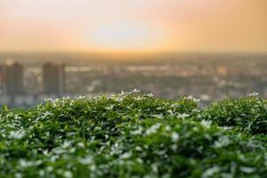 Primer plano de pequeñas flores y arbusto verde en el jardín de la azotea con paisaje urbano borrosa y puesta de sol en segundo plano. foto