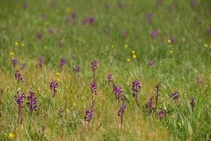 orquídeas de orquídeas foto