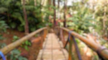 Blur photo of bridge made of bamboo in pine forest