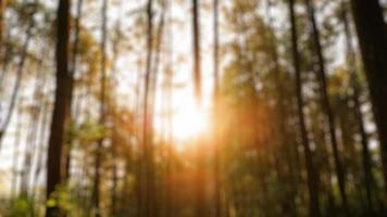 fotos borrosas de paisajes naturales en bosques y campos de arroz que se ven muy frescas