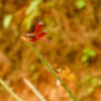Macro blur photo of dragonfly perched on a tree branch