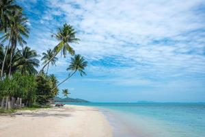 Beautiful tropical beach with palm trees. Coconut tree stretch into the sea photo
