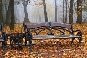 banco en el parque de otoño y muchas hojas amarillas foto