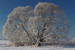 Hermoso árbol cubierto de escarcha en invierno foto
