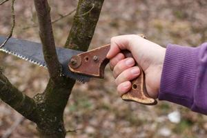 The saw cuts a tree branch. Work in the garden photo