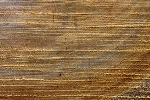 Wooden surface. Slice of a tree close-up photo
