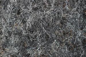 Gray ash after burning grass photo
