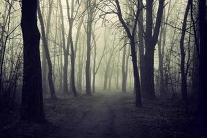 Mystical misty forest in autumn photo