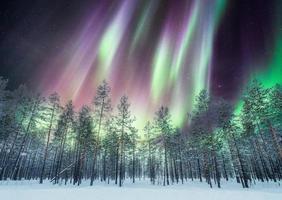 Aurora boreal sobre bosque de pinos en la nieve foto