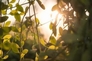 Green leaves in garden at sunset on natural background photo