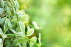 Green leaves in garden on natural background photo