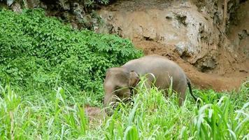 Elephant in nature park. wildlife video