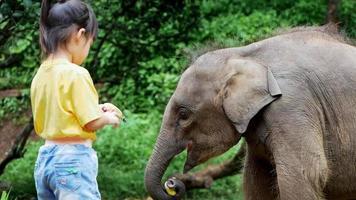 menina bonitinha alimentando bananas para elefantes bebê no acampamento de elefantes. as crianças vão de férias com suas famílias no zoológico. menina dando frutas ao animal selvagem. video