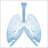 Anatomy of theHuman lungs and bronchi. Human organ structure. Medical sign vector
