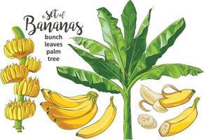 Vector Tropical Bananas Palm Textural Seamless Pattern Illustrator