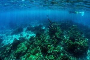 underwater scene with coral reef and fish. photo