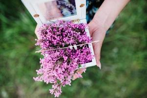 wedding rings in a wooden box filled with branches of lilac photo