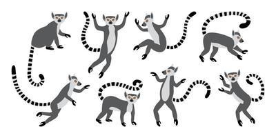 lindos lémures de cola anillada divertidos. lemur catta exótico. conjunto de ilustraciones vectoriales en dibujos animados y estilo plano aislado sobre fondo blanco vector
