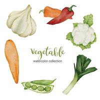 mix vegetable in watercolor collection flat vector on white background