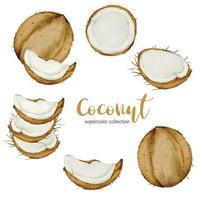 vector plano de colección de acuarela de fruta de coco