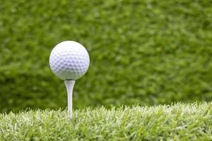 Pelota de golf con tee están sobre la hierba verde foto