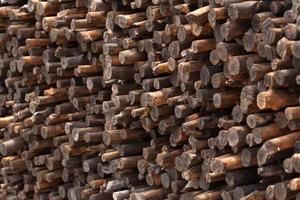 Firewood stacked and prepared for winter Pile of wood logs photo