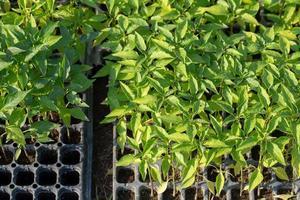 Fines herbes botany plant leaf detail photo