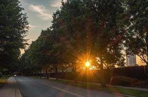 sun peeking through treeline on city street photo