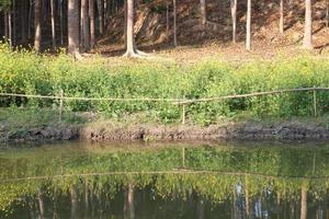 naturaleza con arbol y lago foto