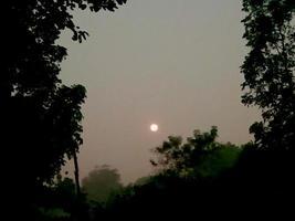 sol vespertino en el cielo y el árbol foto