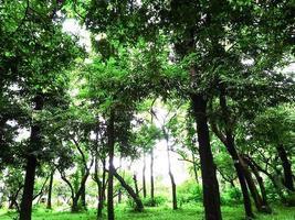 planta de árbol en el jardín con la naturaleza foto