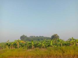 árbol verde y primer plano del cielo azul foto