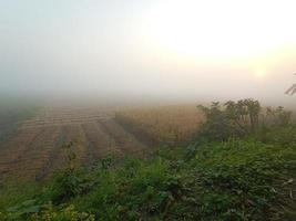 naturaleza con campo y cielo foto