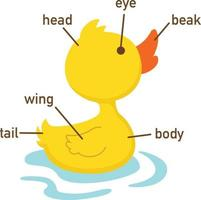 Illustration of duck vocabulary part of body.vector vector