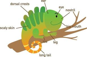 Ilustración de la parte del vocabulario de iguana de body.vector vector